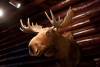 A moose mount at the Keweenaw Mountain Lodge in Copper Harbor Michigan in winter.