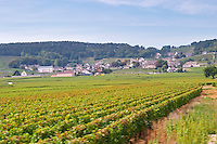 Vineyard. Volnay village. Burgundy, France