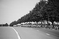 stretched peloton<br /> <br /> Eneco Tour 2013<br /> stage 1: Koksijde - Ardooie (175km)