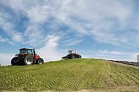 Cow feed. El Principal ranch, the biggest ranch providing milk to Alpura, Delicias, Chihuahua, Mexico