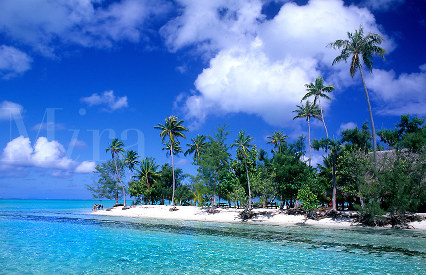 Exotic island of Bora Bora, Tahiti, French polynesia with clear blue water and palm trees.