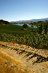 CA, Napa Valley Vineyard, Quintessa  .Photo: canapa101..Photo copyright: Lee Foster, 510-549-2202, lee@fostertravel.com, www.fostertravel.com