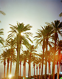 USA, California, palm trees against sky at dusk at an RV park in Palm Springs
