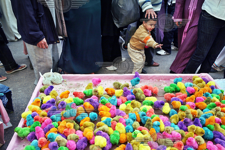 Coloured chicks for sale at a market in Meknes.