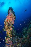 Coral covered spire, Maldives
