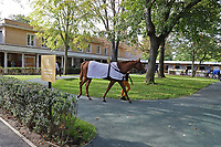 LONGCHAMP, FRANCE - October 06, 2018: Inside the stable area of the Longchamp race track.