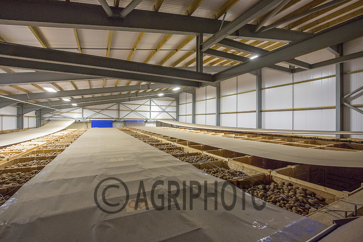 Inside the a potato store<br /> Picture Tim Scrivener 07850 303986<br /> tim@agriphoto.com<br /> &hellip;.covering agriculture in the UK&hellip;.