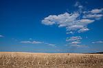Europa, DEU, Deutschland, Baden-Wuerttemberg, Kraichgau, Kraichgauer Huegelland, Agrarlandschaft, Feld, Acker, Sommer, Typische Landschaft, Kategorien und Themen, Landwirtschaft, Landwirtschaftlich, Agrar, Agrarwirtschaft, Wetter, Himmel, Wolken, Wolkenkunde, Wetterbeobachtung, Wetterelemente, Wetterlage, Wetterkunde, Witterung, Witterungsbedingungen, Wettererscheinungen, Meteorologie, Bauernregeln, Wettervorhersage, Wolkenfotografie, Wetterphaenomene, Wolkenklassifikation, Wolkenbilder, Wolkenfoto<br /> <br /> [Fuer die Nutzung gelten die jeweils gueltigen Allgemeinen Liefer-und Geschaeftsbedingungen. Nutzung nur gegen Verwendungsmeldung und Nachweis. Download der AGB unter http://www.image-box.com oder werden auf Anfrage zugesendet. Freigabe ist vorher erforderlich. Jede Nutzung des Fotos ist honorarpflichtig gemaess derzeit gueltiger MFM Liste - Kontakt, Uwe Schmid-Fotografie, Duisburg, Tel. (+49).2065.677997, ..archiv@image-box.com, www.image-box.com]
