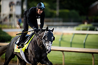 LOUISVILLE, KY - MAY 01: Tapwrit gallops at Churchill Downs on May 01, 2017 in Louisville, Kentucky. (Photo by Alex Evers/Eclipse Sportswire/Getty Images)