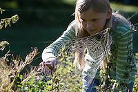 """Mädchen, Kind betrachtet das Spinnennetz einer Vierfleck-Kreuzspinne, Vierfleckkreuzspinne, """"Keine Angst vor Spinnen!"""", Weibchen, Kreuzspinne, Radnetz, Araneus quadratus, fourspotted orbweaver, Araneidae, Radnetzspinnen, Kreuzspinnen, orbweavers, orb-weaving spiders"""