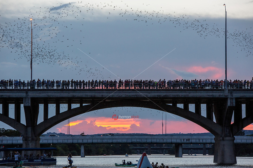 Top 5 Tips to See the Austin Bats: <br /> 1. Go in Late July - Early September to see the best flights 2. Park in the Austin American Statesman parking lot on Congress Ave. (free after 6 pm) 3. Arrive by 8:20 pm to ensure you don't miss the sunset and the flight 4. Bring a blanket and sit on the lawn (less dangerous than the bridge if you have kids) 5. Bring some bug spray (the bats are coming out to eat mosquitos y'all, so who are the mosquitos going to eat?).