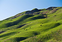 Scenic Rolling Green Hills in Piru California