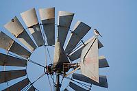 American Kestrel (Falco sparverius), adult perched on wind mill, Sinton, Corpus Christi, Coastal Bend, Texas, USA