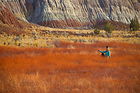 A woman relaxes in a field of different colors grasses in Northern Arizona.