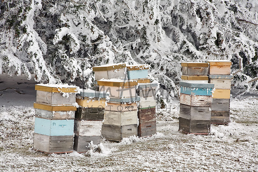 Frozen Bees, hoar frost, central otago, new zealand, bees, bee hives