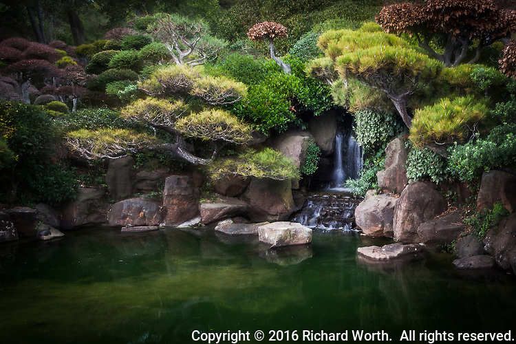 A waterfall surrounded by sculpted shrubs reflected in the koi pond at the Japanese Garden, tucked away in a busy urban neighborhood.