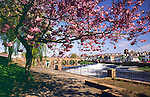 Spring Dumfries looking up to the Caul and Devorguilla Bridge on the River Nith and across to the Whitesands Scotland UK