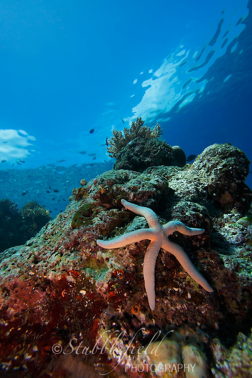 Sea star or starfish (linckia laevigata) on a coral reel with clouds and sky above, off Bunaken Island, North Sulawesi, Indonesia.