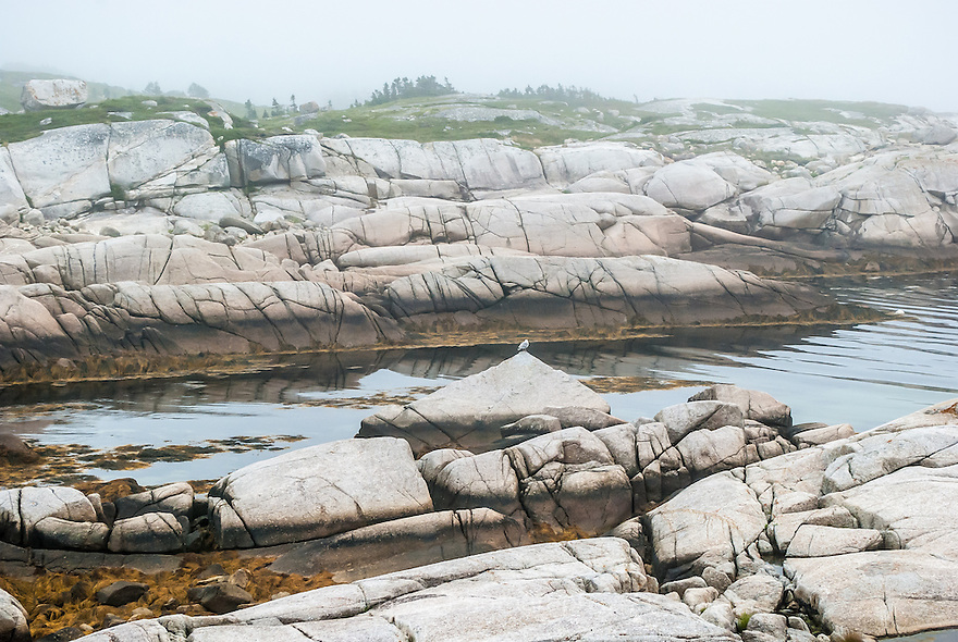 A lone seagull sitting on a triangular rock in a calm inlet at Peggy's Cove, Nova Scotia