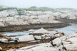 A lone seagull sitting on a triangular rock in a calm inlet at Peggy's Cove, Nova Scotia