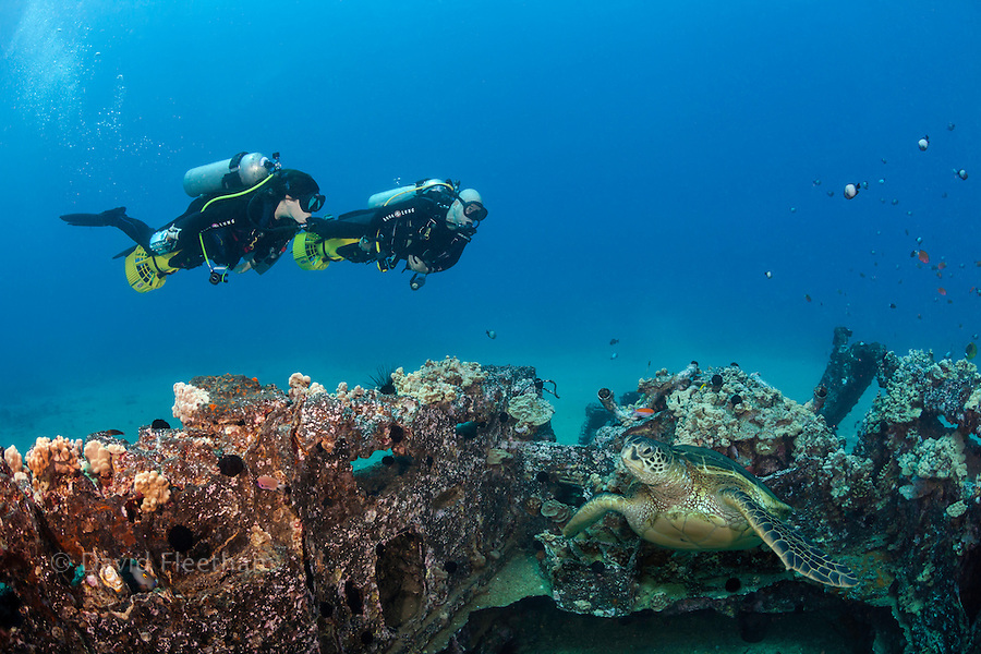 A green sea turtle, Chelonia mydas, and two divers (MR) with underwater scooters exploring a WW II landing craft off the coast of South Maui, Hawaii.