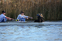 Crew: 17   Op J18 8+   Latymer Upper School Boat Club   LTU-MCCHESNEY<br /> Wallingford Head 2017<br /> <br /> To purchase this photo, or to see pricing information for Prints and Downloads, click the blue 'Add to Cart' button at the top-right of the page.