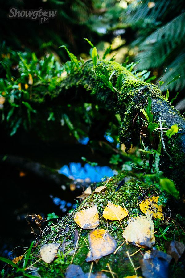Image Ref: CA301<br /> Location: Californian Redwoods, Beech Forest<br /> Date of Shot: 28.04.18