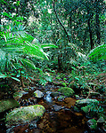 Rainforest Creek, Daintree National Park, Queensland