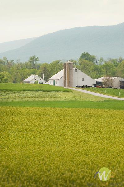 Franklin County, Pa. Farm in Spring.