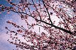 3.19.18 - Very Cherry...