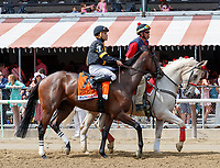 Still Having Fun in the post parade as Promises Fulfilled (no. 1) wins the Allen Jerkens  Stakes (Grade 1), Aug. 25, 2018 at the Saratoga Race Course, Saratoga Springs, NY.  Ridden by  Luis Saez, and trained by Dale Romans, Promises Fulfilled finished 1 1/4 lengths in front of Seven Trumpets (No. 5).  (Bruce Dudek/Eclipse Sportswire)