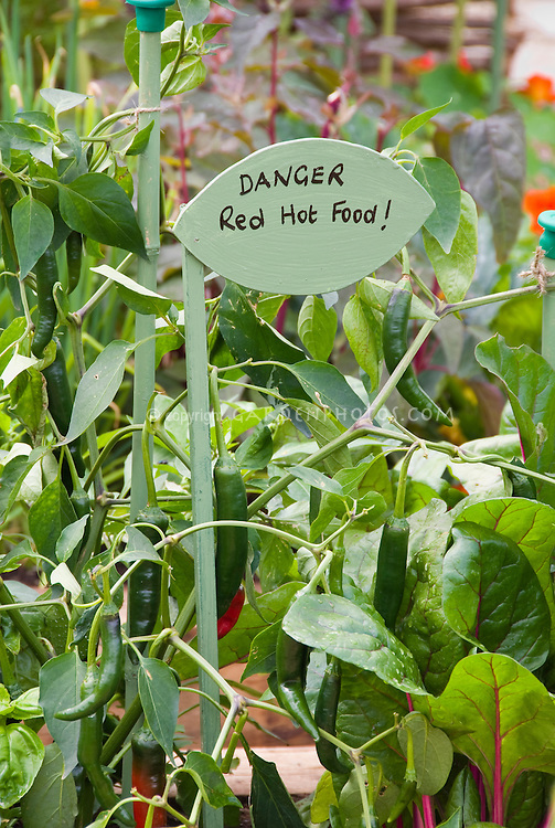 Hot peppers growing with Danger Red Hot Food sign label Capsicum in garden Chili pepper vegetable, cute