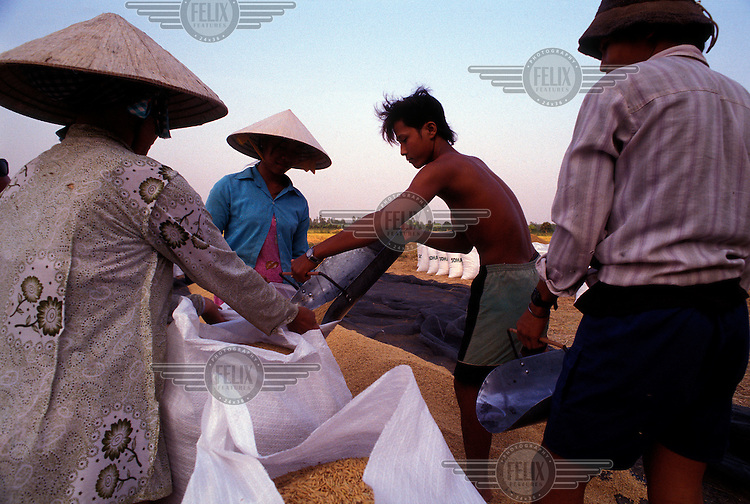 Rice farmers putting newly harvested and dried rice into sacks at the end of the day. Rice is the single most important crop in Vietnam involving 70 percent of the working population.