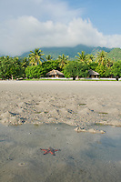 Sea star in shallow water at Tua Koin resort, a small lodge on the beach near Vila on Atauro Island, Timor-Leste (East Timor)