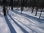 A forest, blanketed in snow, displays stark shadows in the late afternoon sun.