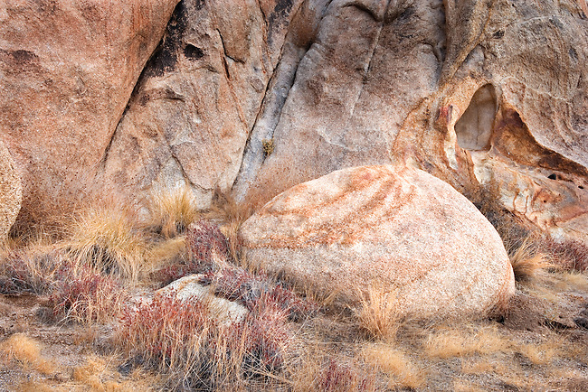Abstract Design of Rounded Boulder, Grasses and Granite Wall, Joshua Tree National Monument, CA.