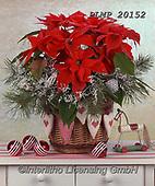 Marek, CHRISTMAS SYMBOLS, WEIHNACHTEN SYMBOLE, NAVIDAD SÍMBOLOS, photos+++++,PLMP20152,#xx#