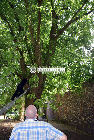 Rescuing a cat stuck up a tree in Norwich. UK