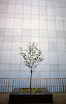 Street scene side of building with tree in marble pot Seattle Washington State USA