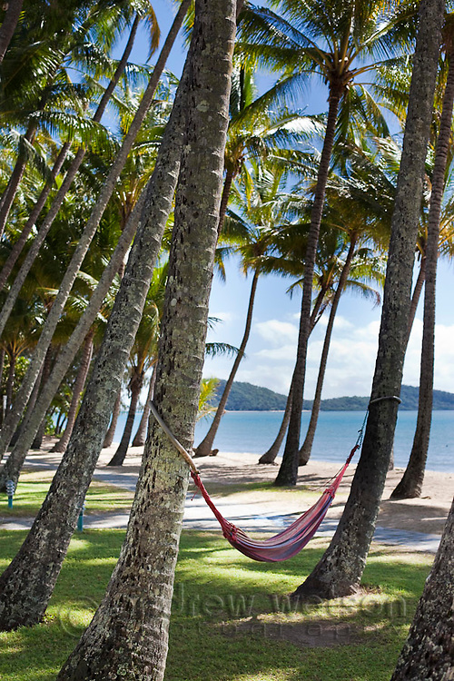 Hammocks amidst coconut palms on the beachfront.  Palm Cove, Cairns, Queensland, Australia