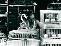 Vogelhändler in Hongkong 1977