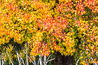 2016-12-10_FALL Colors