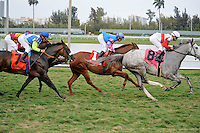 Hit It Rich (no. 8), ridden by Javier Casyellano and trained by Calude McGaughey III, wins the  51st running of the grade 3 Orchid Stakes for fillies and mares four years old and upward on March 31, 2012 at Gulfstream Park in Hallandale Beach, Florida.  (Bob Mayberger/Eclipse Sportswire)