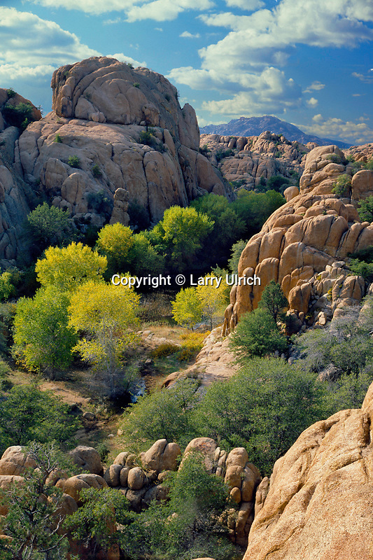 Fremont cottonwoods<br />