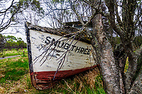An old commerccial fishing boat succumbs to the elements, enveloped literally by nature, on Alaska's Kenai Peninsula.