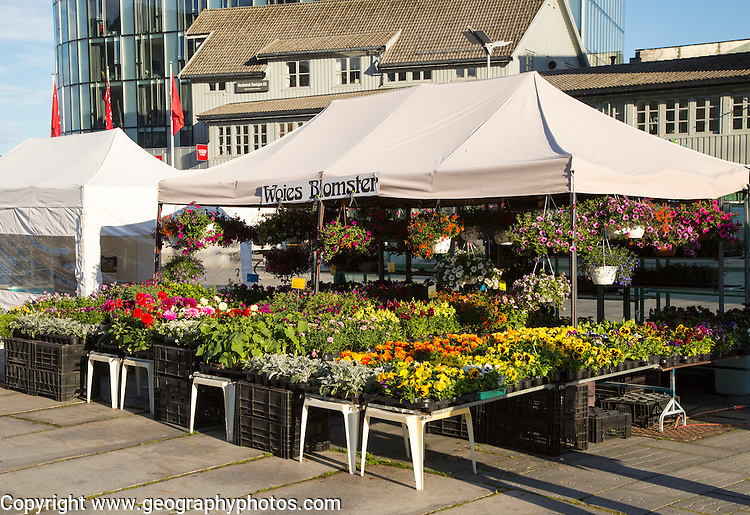 Flowers and plants on market stall in Svolvaer, Lofoten Islands, Nordland, Norway