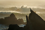 Bird on rock and crashing waves at sunset; Jug Handle State Natural Reserve; Mendocino County coast; California