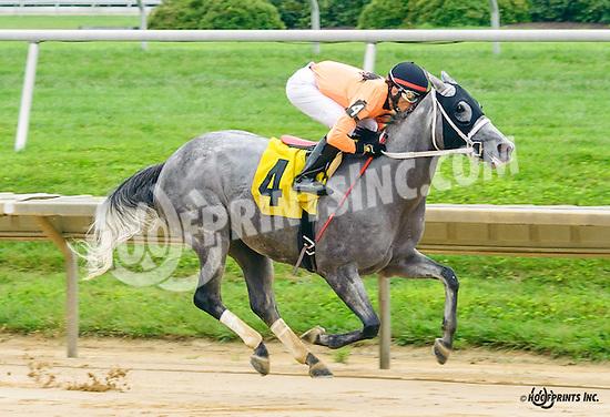 Terri's Pass winning at Delaware Park on 7/30/16