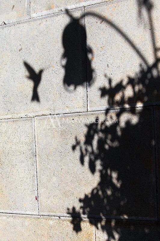 A hummingbird visits a feeder.