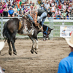 This rider is on the verge of falling from a wild untamed horse, during Valleyfield Rodeo.